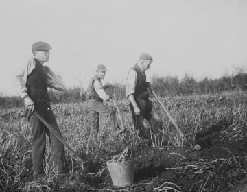 farming problems in the 1800s History essay 11/3/09 there were many problems faced by both farmers and immigrants in the late 1800's the economy was very shaky, the government was not stepping up to help, and the immigrants faced harsh times in their coming to america.